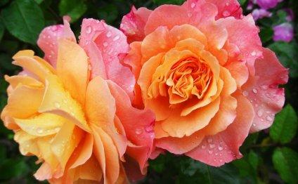 Майская посадка цветов: