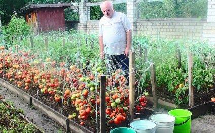 Чтобы урожай был хороший