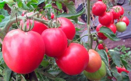 Уход за помидорами включает