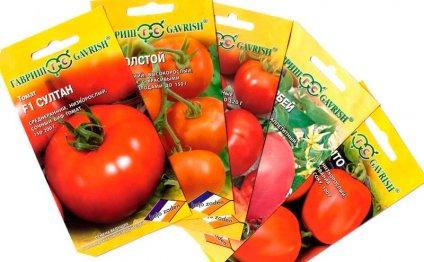 как выращивать томаты из семян