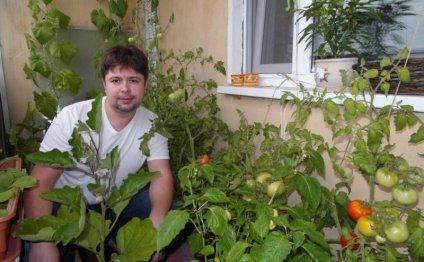 как вырастить помидоры на