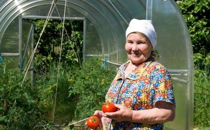 Как вырастить помидоры в