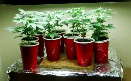 Подойдут готовые рассадные