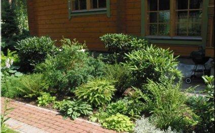Какие растения растут в тени