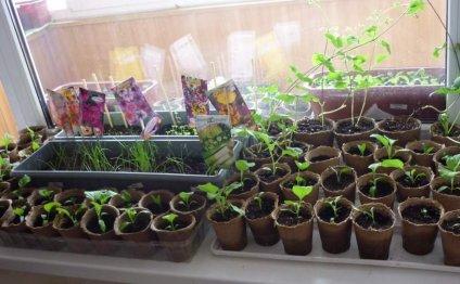 Живая земля для выращивания