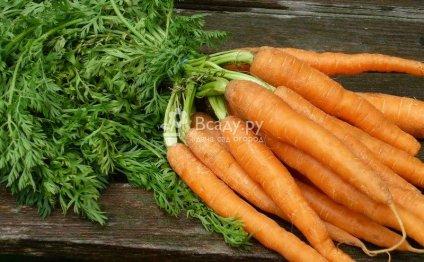 Морковь: выращивание и уход в