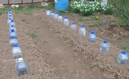 Посаженные семена огурцов