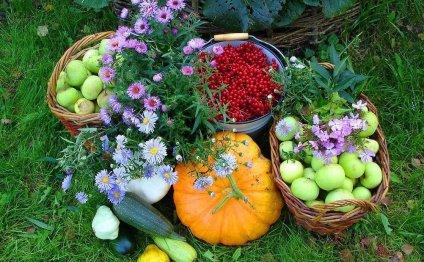 Сад и огород полезные советы