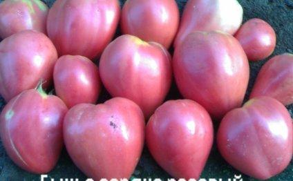 томаты Бычье сердце розовый