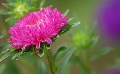 Тенелюбивые Садовые Цветы С