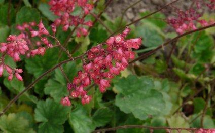 Теневыносливые цветы для