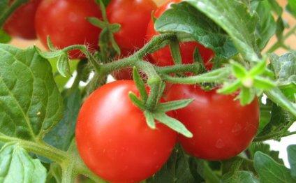 чем подкормить помидоры в