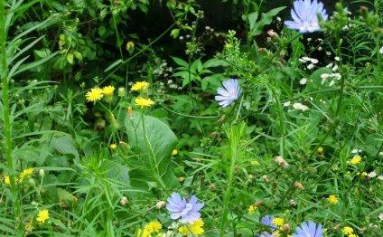 ВедаМост: Про умный огород