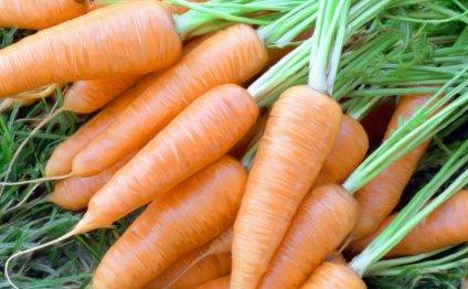 Лучшие сорта моркови для