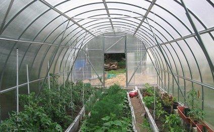 помидоры и огурцы в одной в